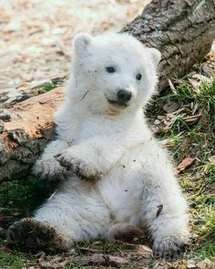 Amazing Happy Animals to Brighten up Your Day - meowlogy Happy Animals, Nature Animals, Cute Baby Animals, Animals And Pets, Funny Animals, Wild Animals, Baby Polar Bears, Cute Polar Bear, Baby Bear Cub