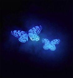 Butterflies in the blue, gif