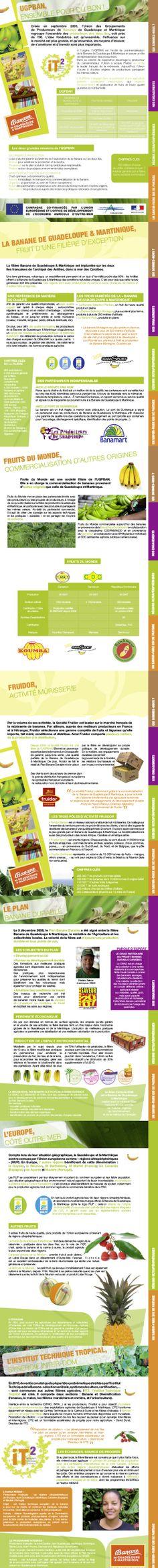 Fiches sur les bananes de Guadeloupe & Martinique réalisée en cours de PAO.