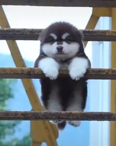 Cute animals Cute baby animals Cute funny animals Cute husky puppies Super cute dogs Animals beautiful - Practical Tips & Tools For Looking After Your Dog In A Heatwave - Super Cute Puppies, Baby Animals Super Cute, Cute Baby Dogs, Cute Little Puppies, Cute Little Animals, Cute Baby Husky, Adorable Dogs, Cutest Animals, Zoo Animals