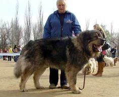 Russian prison dogs - photo#27
