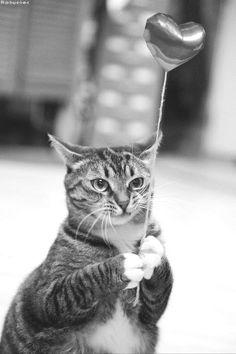 """""""I haz a balloon. Woohoo etc."""""""