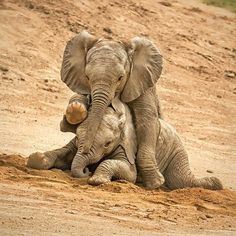 Elephant Sanctuary in South Africa Photo Elephant, Elephant Pictures, Elephants Photos, Save The Elephants, Elephant Love, Elephant Art, African Elephant, Cute Animal Pictures, Baby Elephants