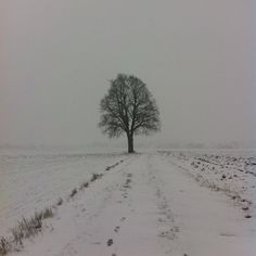 Winter❄️❄️❄️  #nofilter #winter #tree #white #pale #winterbreak #snow #cold #view #landscape #lonely #poland