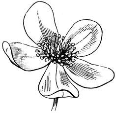 Black Line Drawings of Flowers   Flower