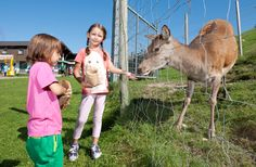 Unser Hirsch im Streichelzoo freut sich auch über die nicht mehr so extremen Temperaturen und ist nun wieder richtig froh über deinen Besuch im #Freizeitpark #Zahmer #Kaiser in #Walchsee. Kaiser, Kangaroo, Camel, Animals, Petting Zoo, Amusement Parks, Baby Bjorn, Animales, Animaux