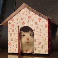 27 Hamster Safety Tips - Dwarf Hamster Blog