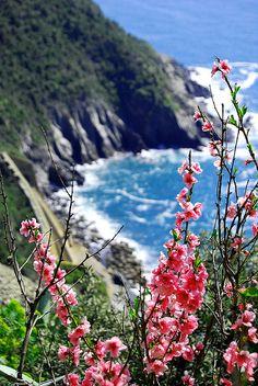 Cinque Terre   - Italy   (Source: flickr.com)