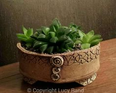 Haworthia in pot by Photo and arrangement by Lucy Rand