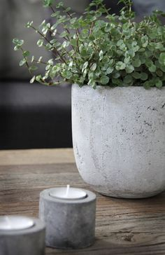 Have you noticed that concrete pots and planters are having a moment right now? Indoor Garden, Indoor Plants, Outdoor Gardens, Concrete Planters, Planter Pots, Scandinavian Living Room Furniture, Plantas Indoor, Beton Diy, Interior Plants