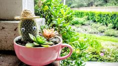 Teacup Planter with Googly Eye Cactus in a Tiny Hat & Succulent Arrangement (PLANTS INCLUDED!)