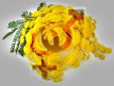 Eccoci arrivati anche quest'anno al giorno della mimosa. Mimose fiorite, sfiorite, spille, bigliettini, messaggini, ricette, gioie, gadget e alberelli … l'universo mimosa si muove invadendo il mo…