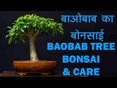 Baobab plants repoting By Parag Mehta MADAGASCAR | Lemurs, Baobab Trees | Hindi | Urdu - YouTube Jade Bonsai, Baobab Tree, Madagascar, The Creator, Lemurs, Trees, Plants, Youtube, Tree Structure