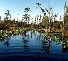 """Okefenokee means """"Land of the Trembling Earth"""""""