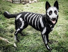 Mira estos encantadores y curiosos disfraces para perros