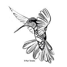 Flying Hummingbird 2