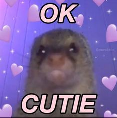 Stupid Memes, Funny Memes, Flirty Memes, Wholesome Pictures, Response Memes, Current Mood Meme, Cute Love Memes, Funny Reaction Pictures, Crush Memes