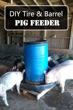 Heavy Duty Brower 22H Double Door Supplement Hog Feeder Hogs won/'t destroy!!