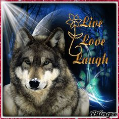 Meet people like on MeetMe! Wolf Images, Wolf Photos, Wolf Pictures, Beautiful Creatures, Animals Beautiful, Native American Wolf, Wolf Artwork, Timberwolf, Wolf Painting