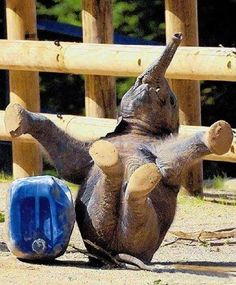 Who says pilates and baby elephants don't mix?
