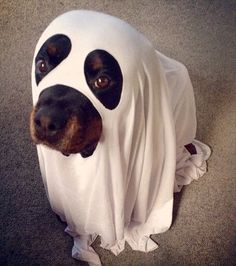 Boo! Did I scare you ?