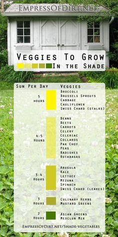 ~Veggies to grow in the shade - lots of options including broccoli, spinach, kale, carrots, and more!