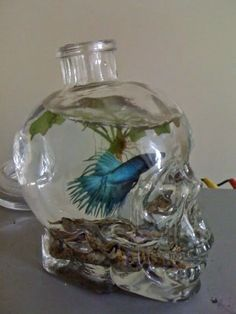 Deformutilation: Crystal Head Vodka Aquariums