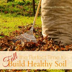 DIY Build Healthy Soil During Fall