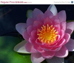 Flower Photography-  Pink Tropical Water Lily  -8x10 -By The Sea -Home Decor. $16.20, via Etsy.