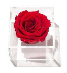 rose acrylic painting ile ilgili görsel sonucu