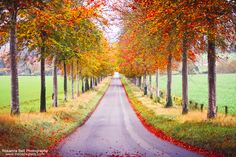 23 Beautiful Autumn Photographs to Inspire You this Autumn | The Bell Sisters