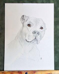 Custom Pet portraits petportraitsbyisabella.com  Graphite with color pencils portrait of beautiful #pitbull