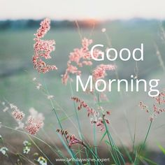 Morning Images have such a power to brighten our day when we stumble upon them! This collection features good morning quotes, all on pics of beautiful flowers. Morning Greetings Quotes, Good Morning Messages, Good Morning Good Night, Morning Wish, Good Morning Images, Good Morning Quotes, Happy Morning, Morning Sayings, Morning Pictures