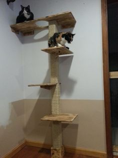 Deluxe kitty climbing structure by felinekingdom12 on Etsy