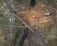 Timber logging employees working in the Ozark Mountains of Missouri find a burned alien body in some nearby brush close to their worksite. This is an enhanced photo of the viral video that came out two months ago which at the time this video was made had close to 60,000 views. Is this an alien or a burn victim? This seems like the big debate over the original video. Maybe this will help people make their decision. I was able to sharpen the image and focused longer on the photo.
