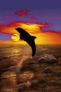 """Le régime broderie """"dauphin coucher de soleil"""" - Plans auteur «HolyMolly» - Point de Croix"""