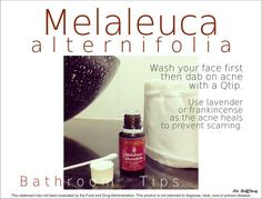 Melaleuca alternifolia - wash your face then dab on acne with a qtip. Use lavender or frankincense as the acne heals to prevent scarring.