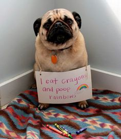 here are some adorable mug shots of adorable pugs. we accept photos of your pugs. pugs in costumes. pugs in cartoon. pugs in videos. pugs in love. mug pug. Funny Animal Pictures, Dog Pictures, Funny Animals, Cute Animals, Dog Photos, Hilarious Pictures, Funny Photos, Baby Animals, Meme Pics