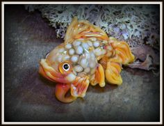 Googly Eyed Gold Fish Lampwork Focal Bead Pendant by HannahRachel