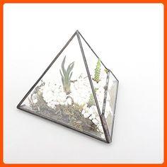 "4.7"" Height Pyramid Clear Glass Miniature Geometric Terrarium Indoor Tabletop Planter for Small Succulent Air Plants Moss Fern Desk Box Garden Diy Display Flower Pot Black - Lets plant (*Amazon Partner-Link)"
