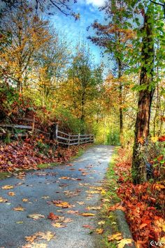 Autumn Trail Art Print
