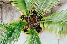 Palm by Hombre-cz on Creative Market