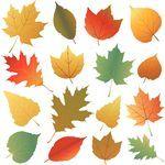 autumn leaf - autumn leaves collection