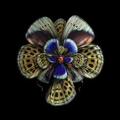 Mimesis: Blooms of Insect Wings by Photographer Seb Janiak | Inspiration Grid | Design Inspiration