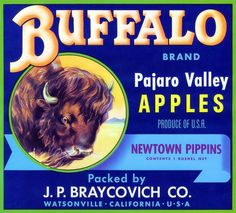 """Buffalo Pajaro Valley Art"" by V. Watson, Virginia // Vintage apple crate label from Watsonville, California. Great image of a snorting buffalo. // Imagekind.com -- Buy stunning, museum-quality fine art prints, framed prints, and canvas prints directly from independent working artists and photographers."