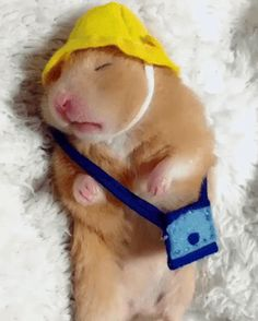 15 Funny Hamster Pictures to Brighten a Bad Day - Page 2 of 3 - Animal World Funny Animal Videos, Funny Animal Pictures, Animal Memes, Funny Hamsters, Funny Dogs, Funny Memes, Cute Little Animals, Cute Funny Animals, Happy Animals