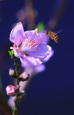 The Beauty of the BEE❤️