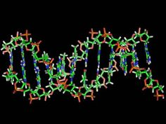 Biological computer that lives inside the body comes one step closer as scientists make transistor out of DNA and RNA - Science - News - The Independent (28 Mar 2013)