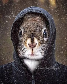 Squirrel Lover, Funny Squirrel Art, Squirrel Photography, Cute Squirrels, Squirrel wall art, Animal Lovers, Cute Animals