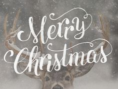 Christ our savior is born!  Also, Rudolph says hi.